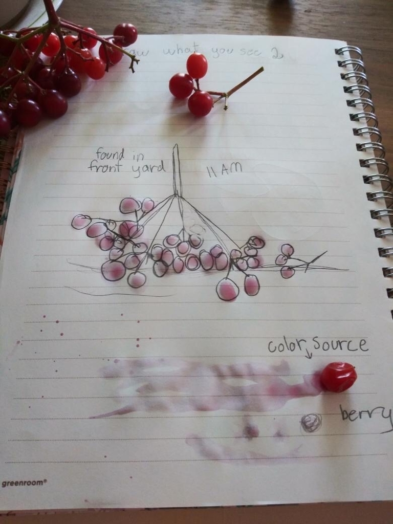 Drawing of berries